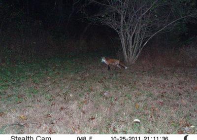 trail-cam-10-25-11-1