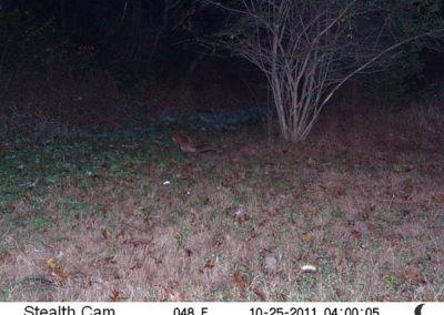 trail-cam-10-25-11
