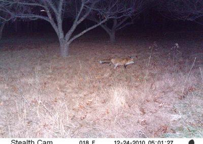 trail-cam-12-24-10