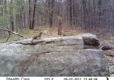 trail-cam-5-7-11
