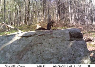 trail-cam-5-8-11-1