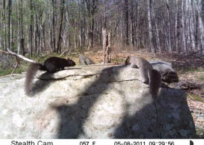 trail-cam-5-8-11-2