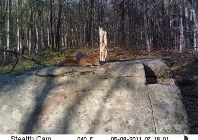 trail-cam-5-8-11
