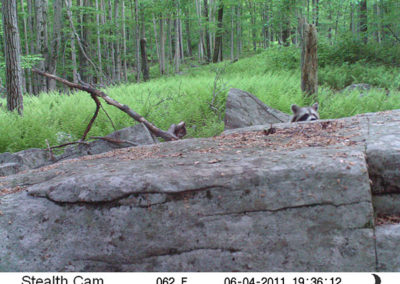 trail-cam-6-4-11-1