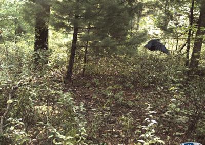 trail-cam-9-14-11
