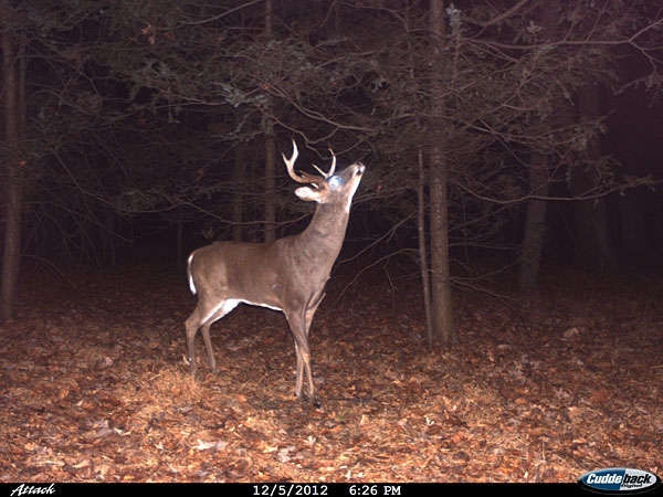 Deer Trail Camera Photos